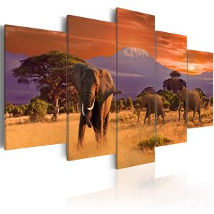 Kuva - Africa: Elephants-1