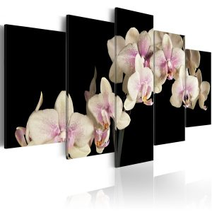 Kuva - An orchid on a contrasting background-1