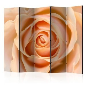 Sermi - Peach-colored rose II [Room Dividers]-1