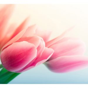 Fototapetti - Spring and tulips-2