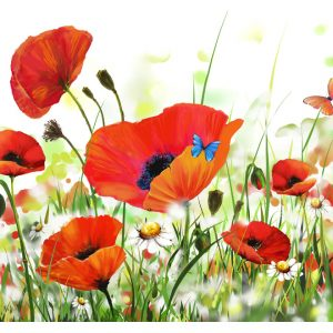 Fototapetti - Country poppies-2
