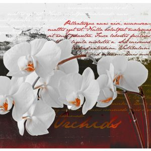 Fototapetti - Diary and orchid-2