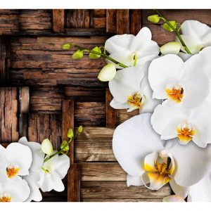 Fototapetti - Blooming orchids-2